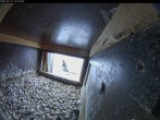 Archived image Webcam Falcons nest at Aachen Cathedral 10:00