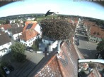 Archived image Webcam Stork Nest on top of the Town Hall of Jettingen-Scheppach 02:00